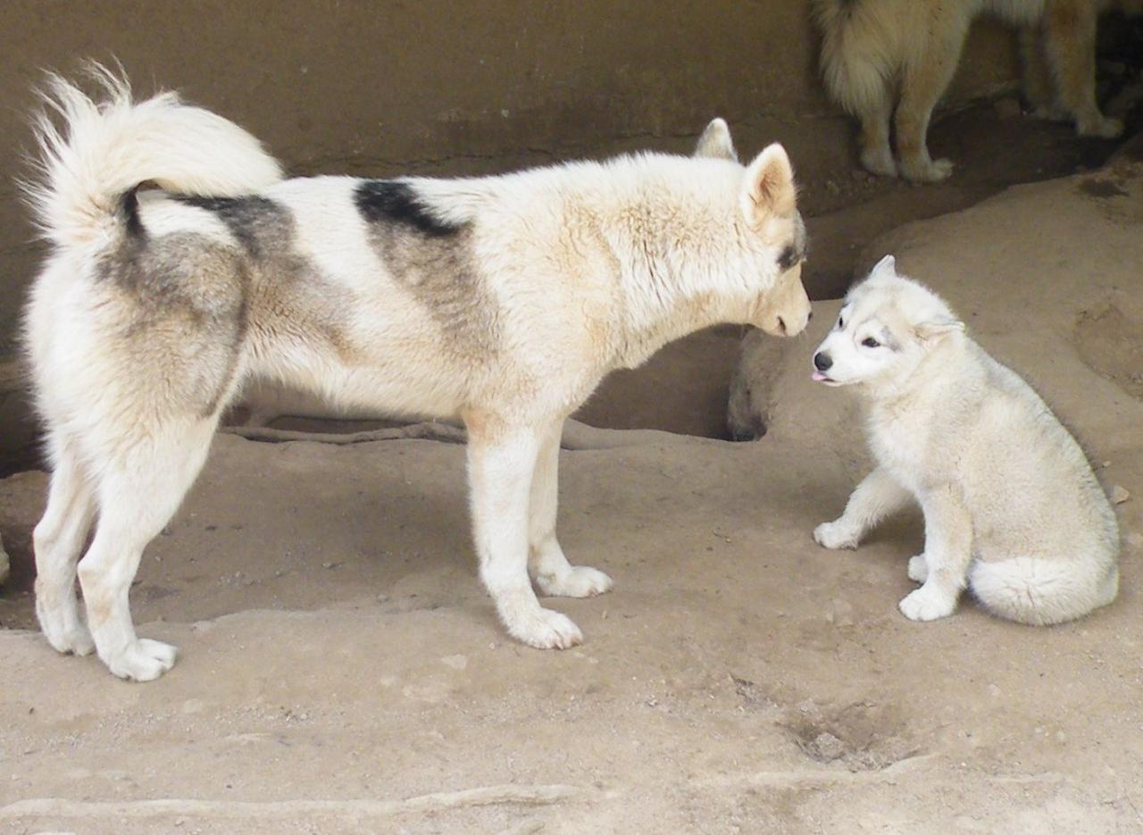 Karma et Hyoko