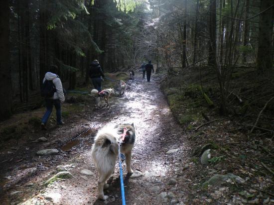 Cani-randonnée 2